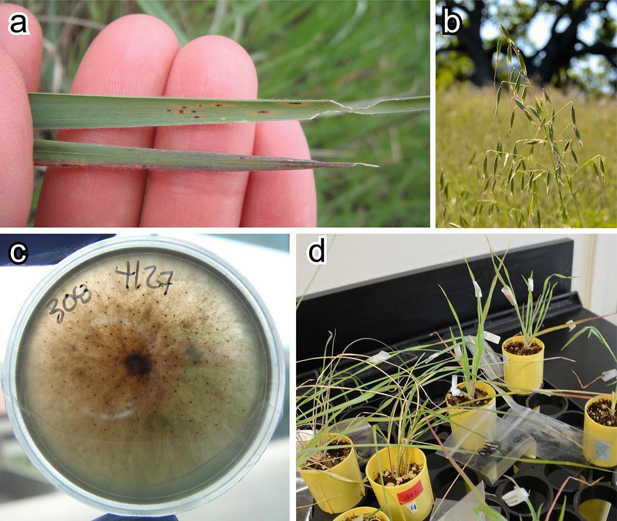 components of foliar fungal pathogen study