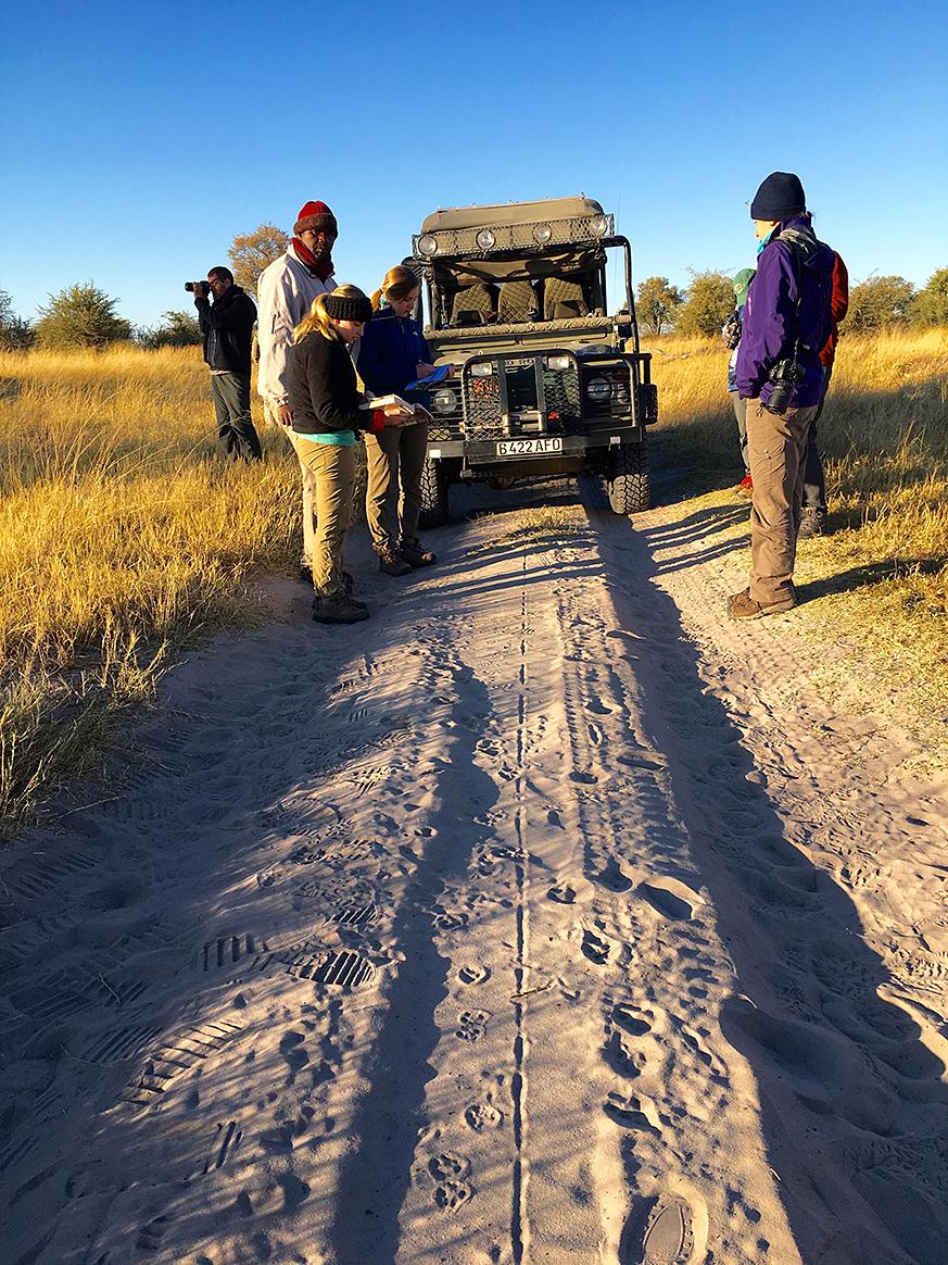 Wild dog tracks