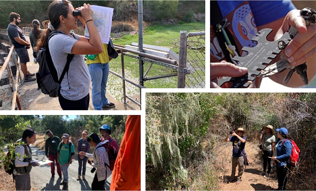 Figure 1. Clockwise, Stanford SACNAS Chapter president, Ellen Bouchard, participating in the national SACNAS BioBlitz; tour of bird-banding stations with our SOAR RCN partners; Bay Area teachers learning about galls with Rodolfo Dirzo; and members of Latino Outdoors visiting Jasper Ridge.