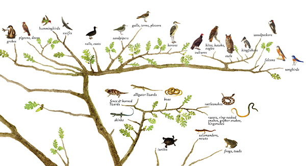 Species Lists - Tree of Life