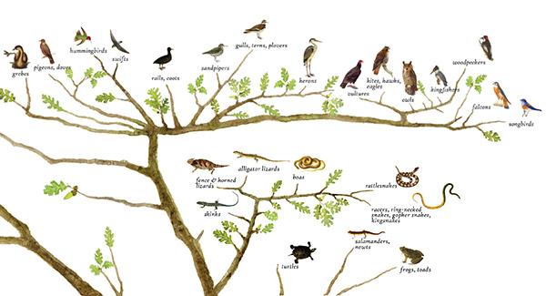 Species Lists - Tree of Life