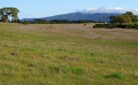 A view of California grassland at Jasper Ridge