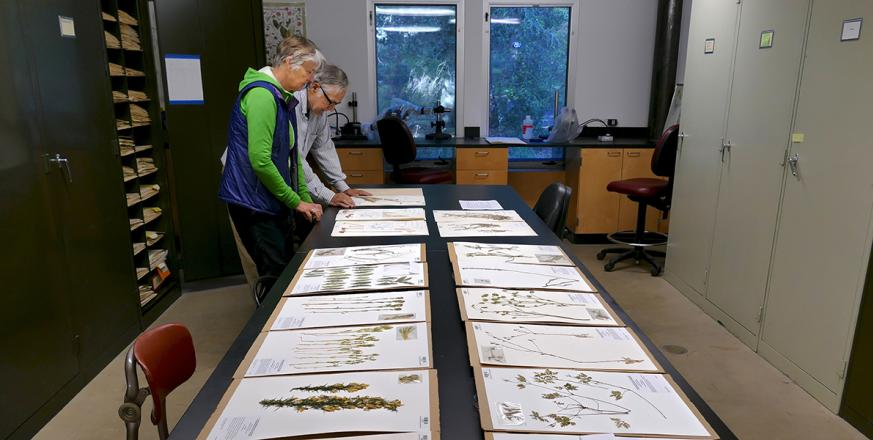 Diane Renshaw and John Rawlings in Jasper Ridge Herbarium
