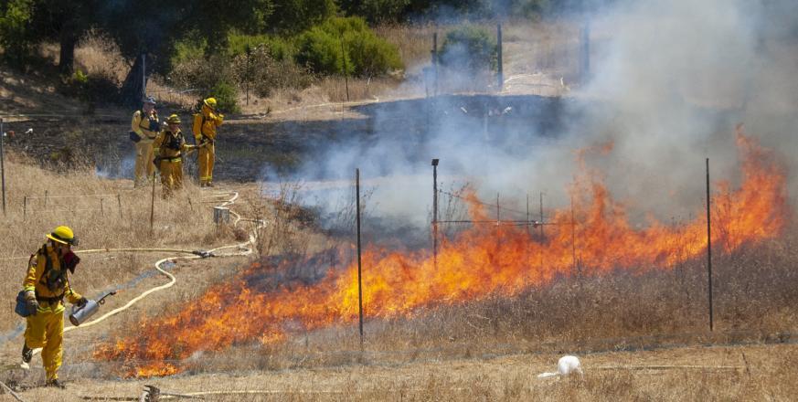 Prescribed burn in the Jasper Ridge global change experiment July 2011