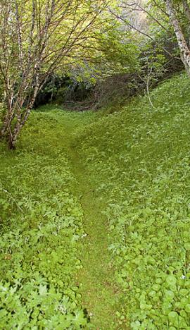 green overhang
