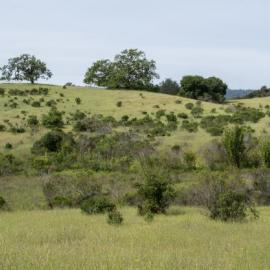 Panorama with Chaparral and Oaks by Dan Quinn