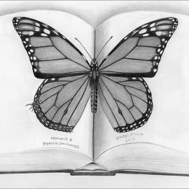 ©2015 Darryl Wheye Pencil drawing asks if visually-hunting predators that avoid dot-patterned larvae, like those of Battus philenor (Pipevine Swallowtail) that feed on pipevine species and sequester aristolochic acid, also avoid dot-patterned monarchs