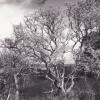 Jasper Ridge tree photo