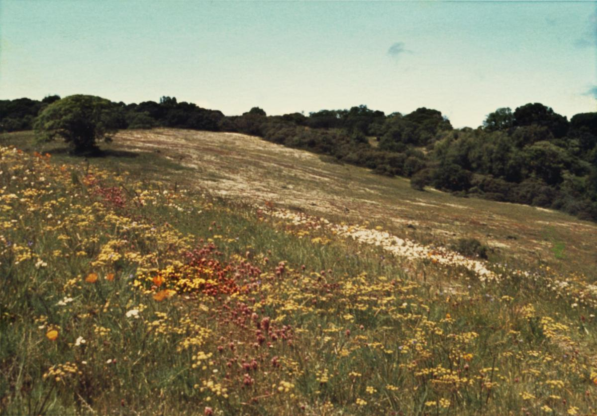 Serpentine Prairie Area H, April 1969; Herb Dengler Collection