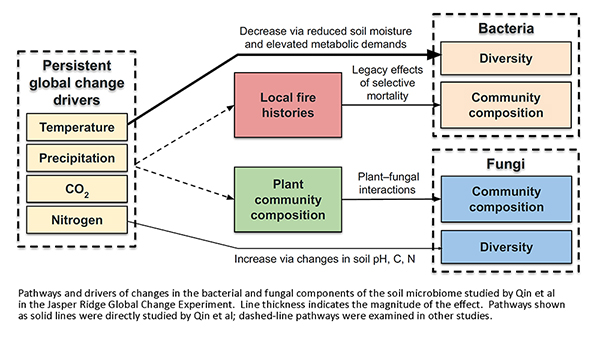 Pathways and drivers of changes in soil microbiome in the JRGCE