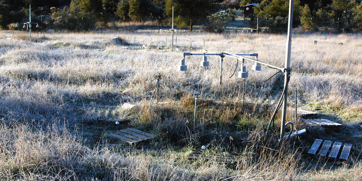 Warmed plot on frosty morning