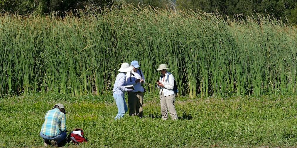 Herbarium members collecting from inner marsh