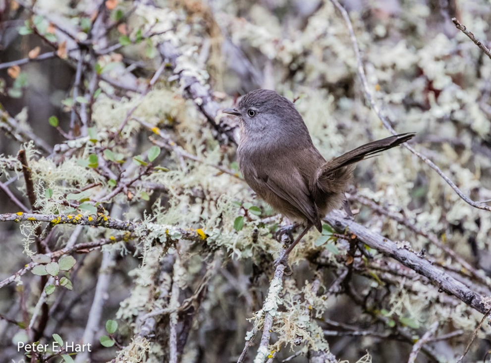 Bird photography and birding, what is the difference? | Jasper Ridge Biological Preserve