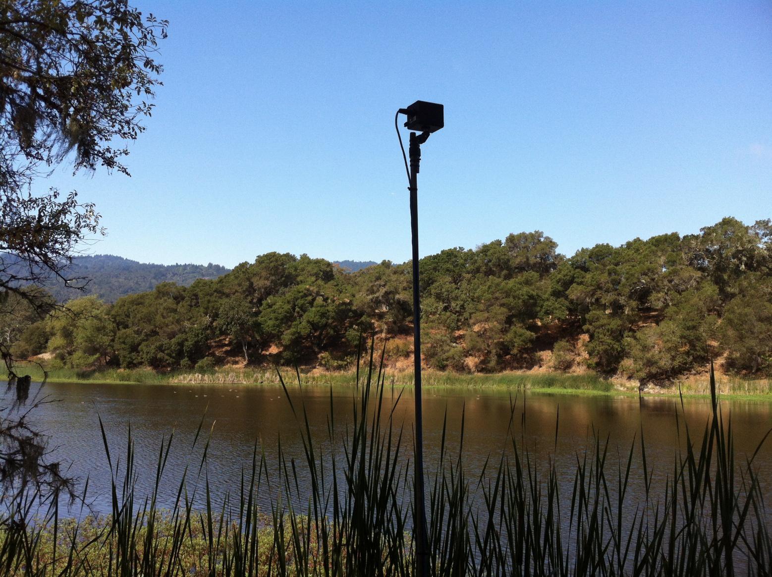 Ultrasonic microphone for bat monitoring