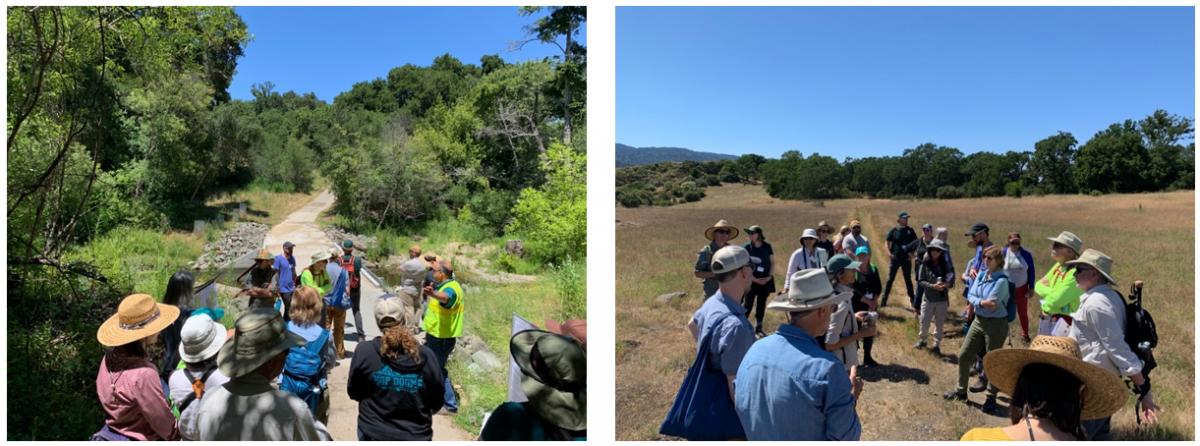 Santa Cruz Mountains Stewardship Network Spotlight Tour at Jasper Ridge