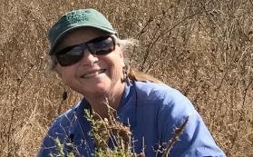 Cindy Wilber removing invasives at Jasper Ridge