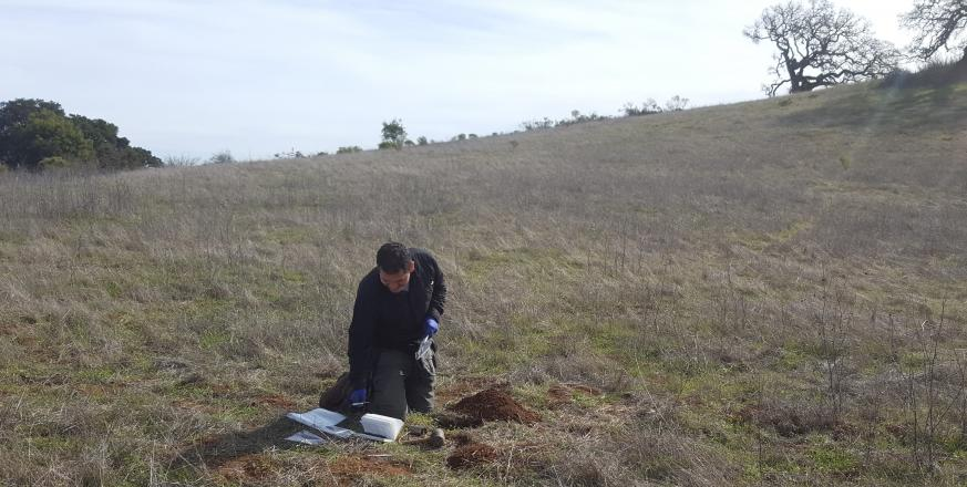 Sergio Redondo obtaining soil cores for earthworm sampling