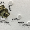 Ants by Catherine Chalmers